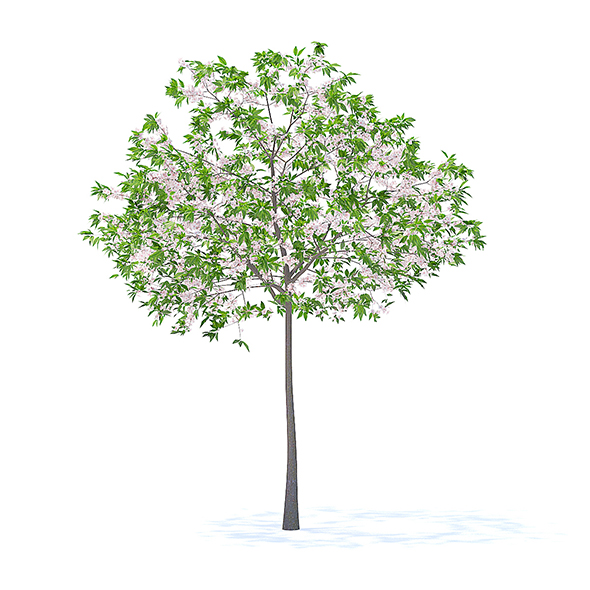 Cherry Tree with Flowers 3D Model 3.3m - 3DOcean Item for Sale