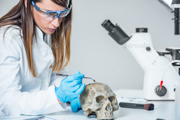 Forensic scientist examining human skull - Stock Photo - Images