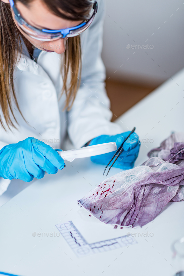 Forensic science expert examining traces of blood on a piece of - Stock Photo - Images