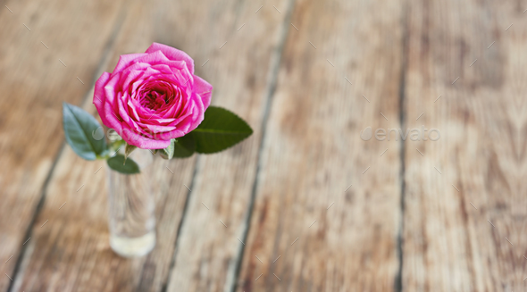Pink rose flower on wooden background with blank, copy space - Stock Photo - Images