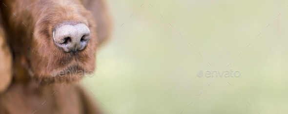 Cute dog nose close-up banner - Stock Photo - Images