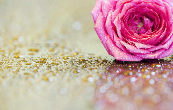 Pink flower greeting card background or web banner idea - Stock Photo - Images