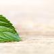 Healthy green mint leaf - PhotoDune Item for Sale