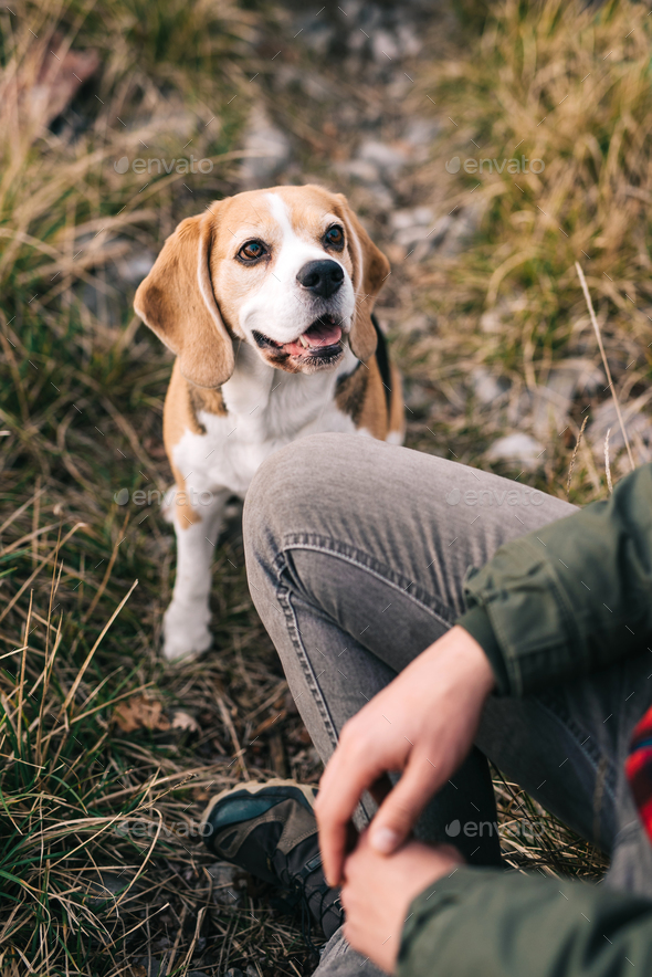 Man and his dog - Stock Photo - Images