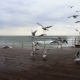 Several Seagulls Soar Off the Concrete Pier - VideoHive Item for Sale