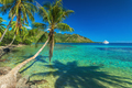 Palm Trees and quiet bay at Moorea in Tahiti - PhotoDune Item for Sale