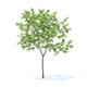 Peach Tree 3D Model 2.3m