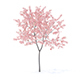 Peach Tree with Flowers 3D Model 2.3m - 3DOcean Item for Sale