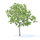 Peach Tree 3D Model 3m - 3DOcean Item for Sale