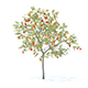 Peach Tree with Fruits 3D Model 3m - 3DOcean Item for Sale