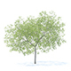 Peach Tree 3D Model 5.8m - 3DOcean Item for Sale
