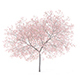 Peach Tree with Flowers 3D Model 5.8m