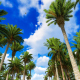 Palm Tree Forest - VideoHive Item for Sale