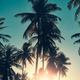 Coconut palm trees silhouettes at sunset. - PhotoDune Item for Sale