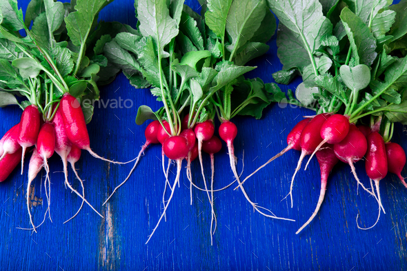 Fresh radish on blue background. - Stock Photo - Images