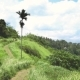 View of the Campuhan Ridge Walk, Green Hill, Palm Tree and Jungle in Ubud, Bali - VideoHive Item for Sale