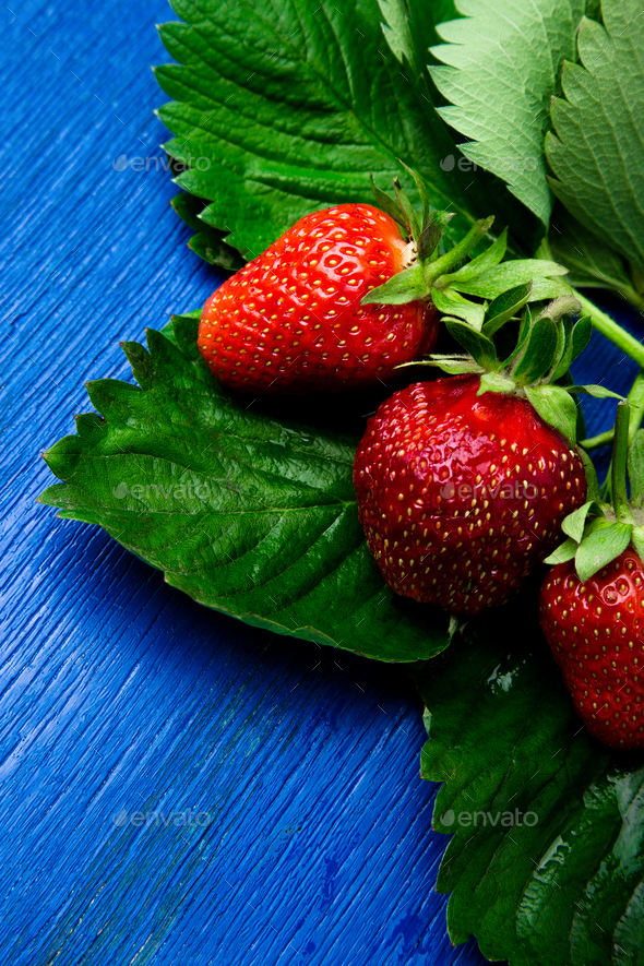 Wet strawberry with leaves on blue - Stock Photo - Images