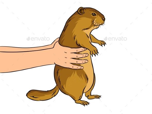 Groundhog in Hands Pop Art Vector Illustration - People Characters