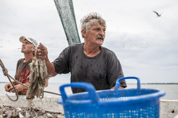 Fishermen sorting catch of shrimp on the deck of a ship. - Stock Photo - Images