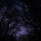 Night Forest - VideoHive Item for Sale