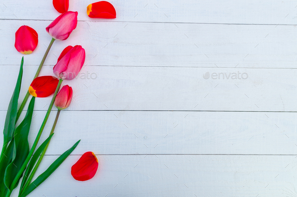 Red tulips on white wooden background - Stock Photo - Images