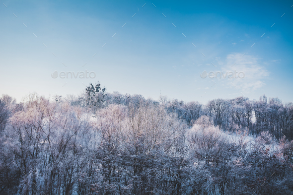 Frosty winter landscape in snowy forest - Stock Photo - Images