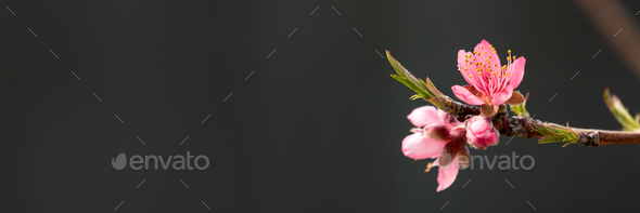 Tree flowers - Stock Photo - Images