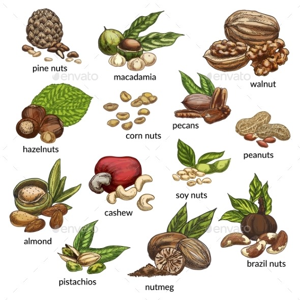Set of Isolated Different Nut Types - Food Objects