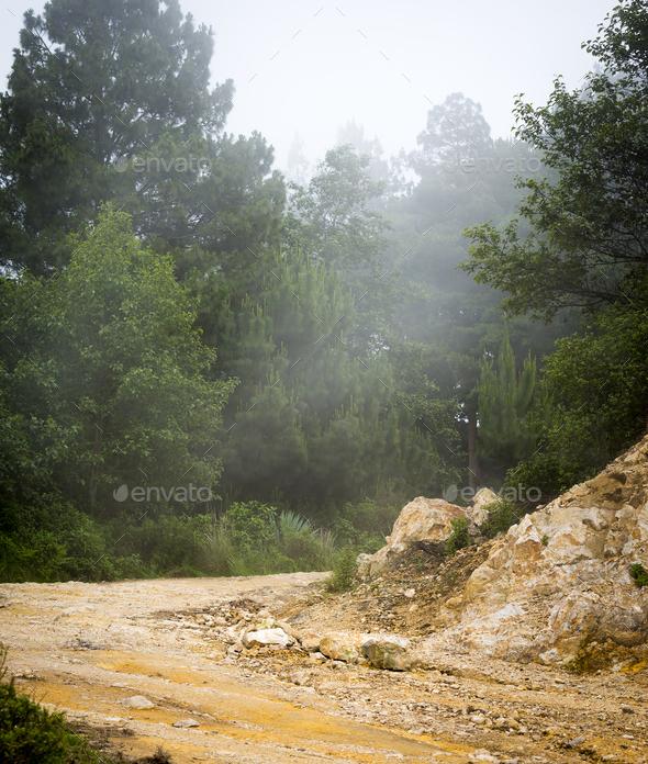 Misty Forest Guatemala - Stock Photo - Images