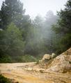 Misty Forest Guatemala - PhotoDune Item for Sale