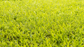 Lawn Dew Drops - PhotoDune Item for Sale