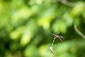 Dragonfly On Branch - PhotoDune Item for Sale