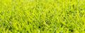 Grass Dew Drops - PhotoDune Item for Sale