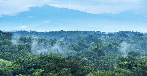 Mexico Jungle Landscape - Stock Photo - Images