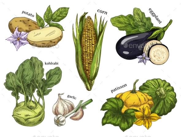 Sketch of Corn and Potato, Kohlrabi and Eggplant - Food Objects