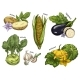 Sketch of Corn and Potato, Kohlrabi and Eggplant
