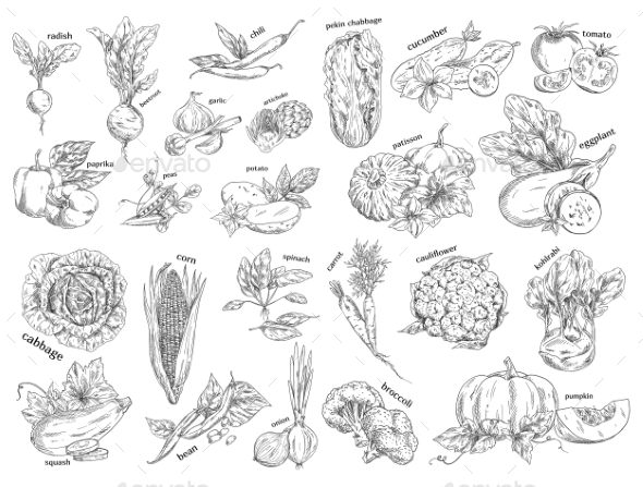 Sketch of Vegetarian Food - Food Objects