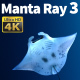 Manta Ray 3 - VideoHive Item for Sale