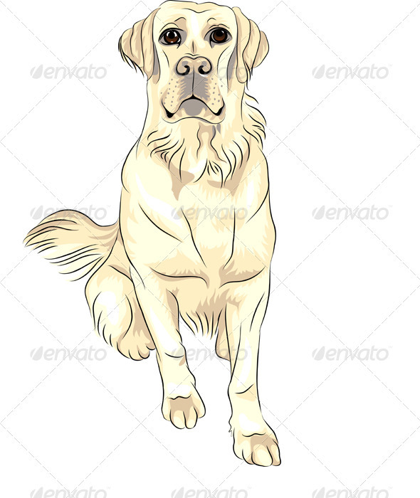 Vector Dog Breed White Labrador Retrievers Sitting - Animals Characters