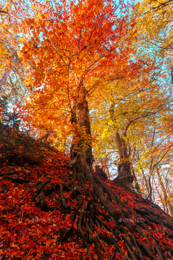 Golden autumn in the forest - Stock Photo - Images
