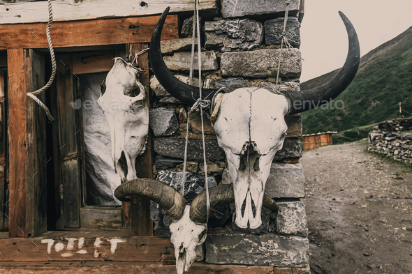 The sculls of wild horned animals. Background. - Stock Photo - Images