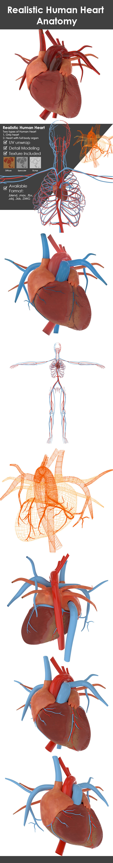 Exelent Visible Body 3d Human Anatomy Atlas 2 Gallery Anatomy