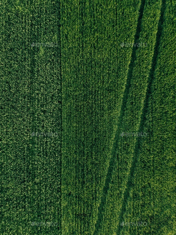Farmland from above - aerial view of a lush green filed in summer - Stock Photo - Images