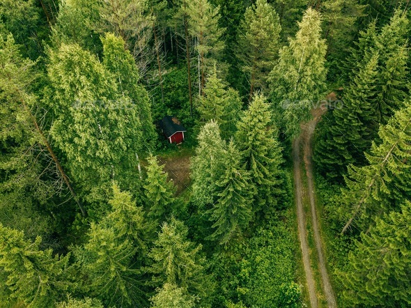 Aerial view of the road through the spruce forest. red ...