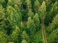 Aerial view of the road through the spruce forest. red cabin in the forest in Finland - PhotoDune Item for Sale