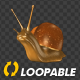 Snail - Crawling Loop - Left View - VideoHive Item for Sale