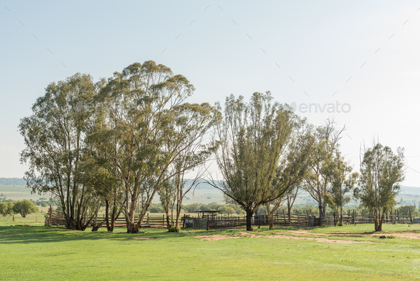 Early morning farm scene at the Koranna Mountain near Excelsior - Stock Photo - Images
