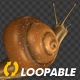 Snail - Crawling Loop - Back View - VideoHive Item for Sale