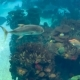 A Variety of Tropical Fish Over a Coral Reef - VideoHive Item for Sale