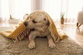 Cute dog at home - PhotoDune Item for Sale